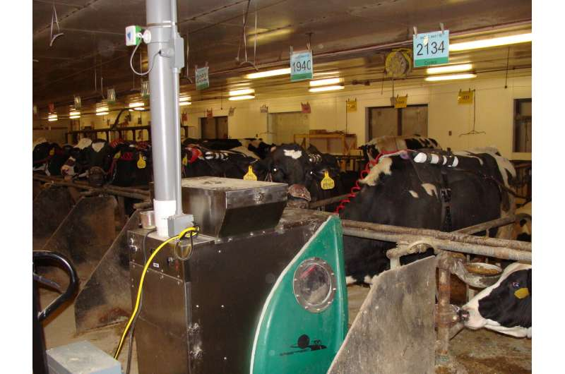 Seaweed feed additive cuts livestock methane but poses questions