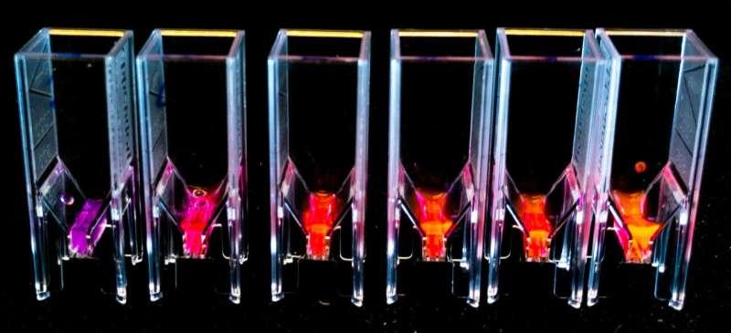 Secrets of fluorescent microalgae could lead to super-efficient solar cells