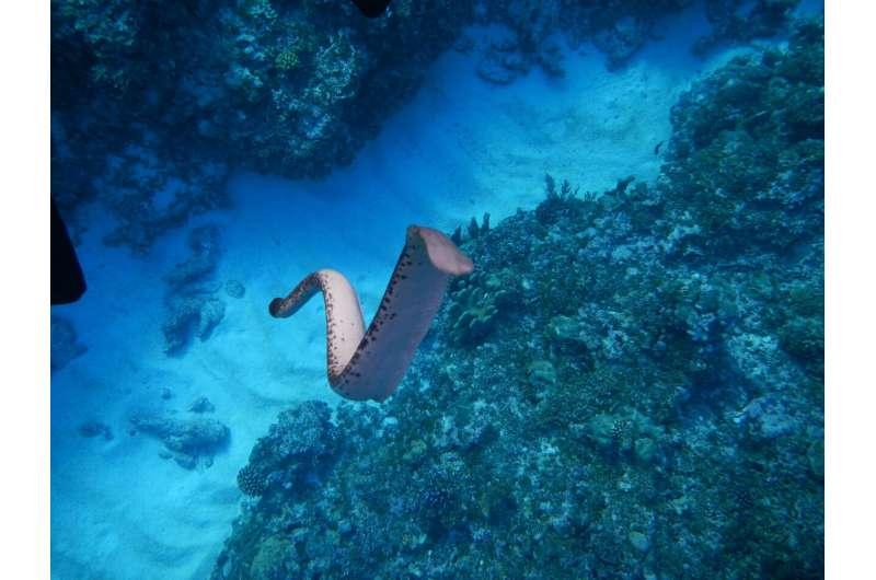 'Seeing' tails help sea snakes avoid predators