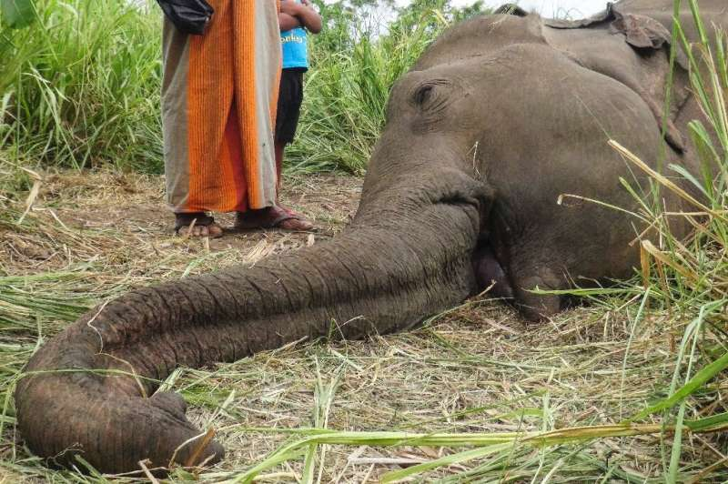 Seven elephants are believed to have been poisoned by angry villagers in Sri Lanka