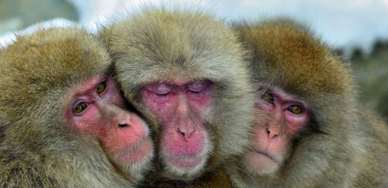 Should scientists change the way they view (and study) same sex behavior in animals?