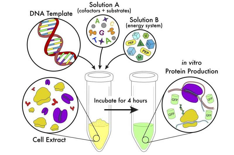 Simplified method makes cell-free protein synthesis more flexible and accessible