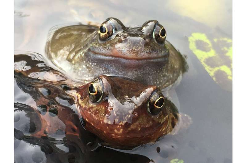 Skin bacteria could save frogs from virus