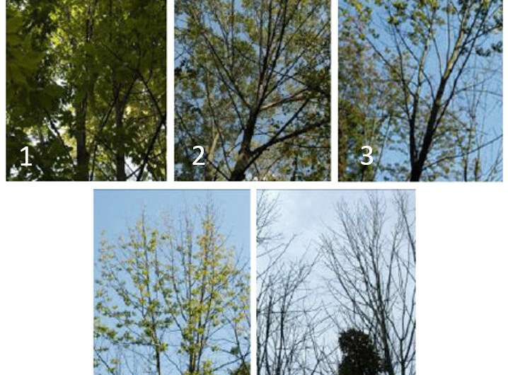 Some green ash trees show some resistance to emerald ash borers