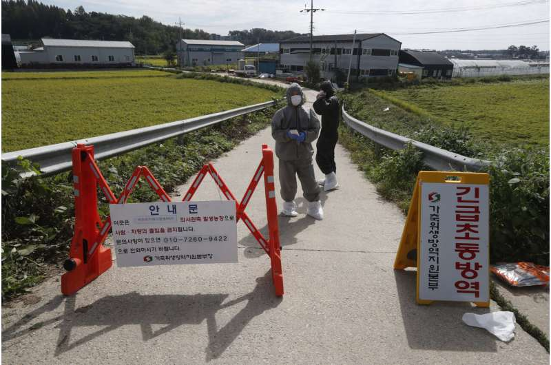 South Korea reports more suspected swine fever cases