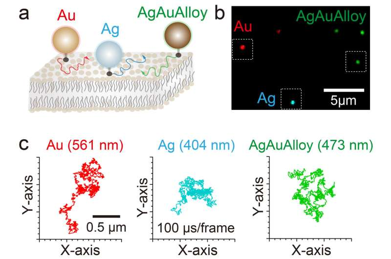 Speedy and precise multicolor imaging of biomolecules now possible