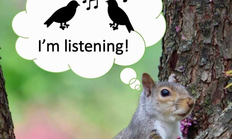 Squirrels listen in to birds' conversations as signal of safety