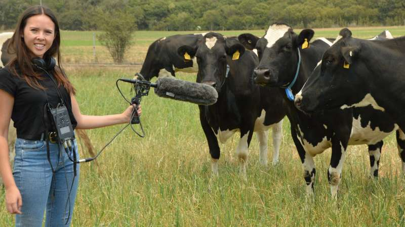 Stand out from the herd: how cows commoonicate through their lives