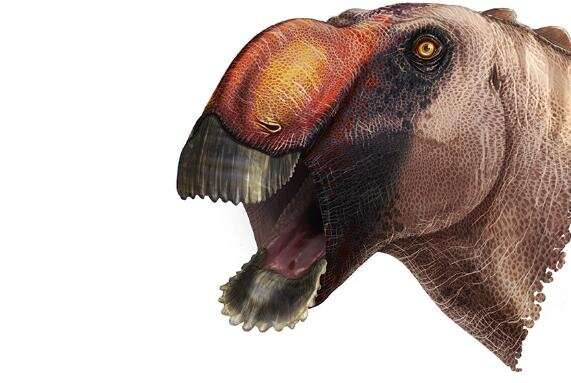 Strange new species of duck-billed dinosaur identified