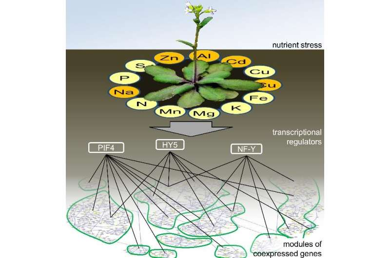 Stressed plants must have iron under control