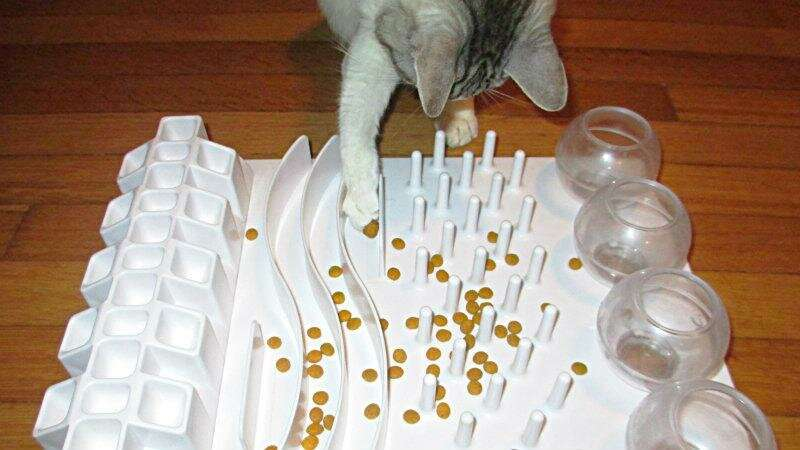 Study finds nearly a third of cat owners use food puzzles