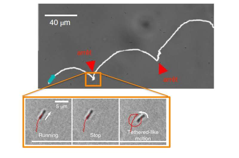 Studying the swimming patterns of bacteria near surfaces