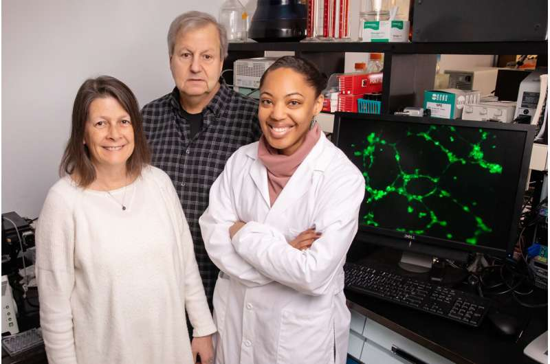 Study in mice examines impact of reused cooking oil on breast cancer progression