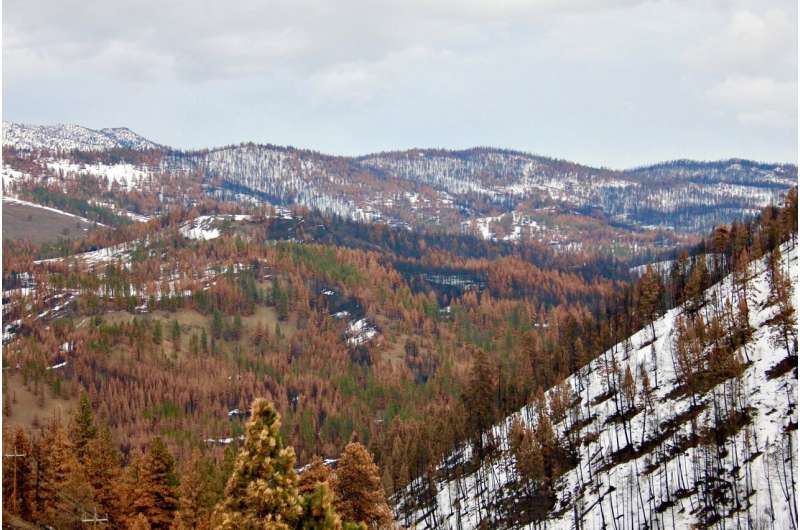 Study: Wildfires in Oregon's blue mountains to become more frequent, severe due to climate change