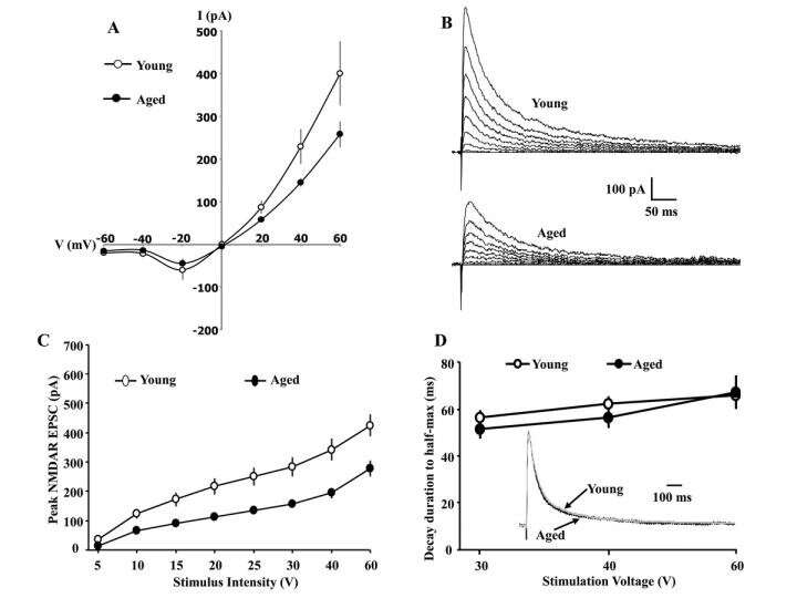 Subunit contribution to NMDA receptor hypofunction and redox sensitivity of hippocampal synaptic transmission during aging
