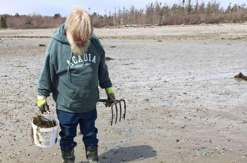 Summer of Blob: Maine sees more big, stinging jellyfish