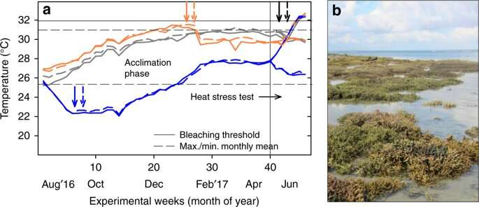 Super-corals adapt well to cold but struggle with warming oceans