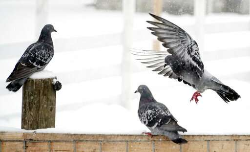Taxpayers are asked to support falcons, fight pigeon poop