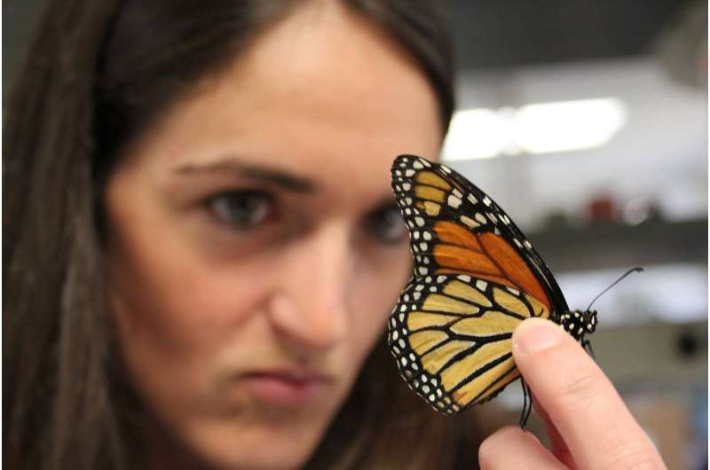 Team finds link between vitamin A and brain response in Monarch butterflies