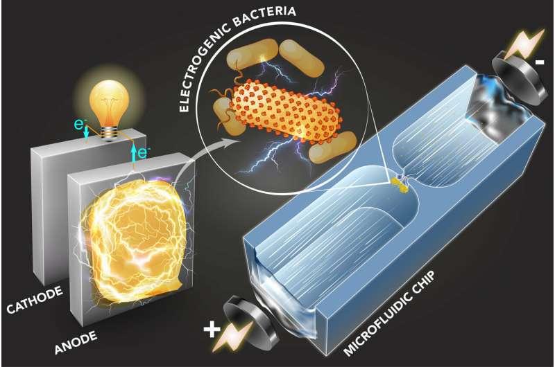 Technique identifies electricity-producing bacteria