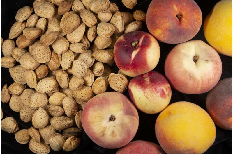 The almond & peach trees genomes shed light on the differences between these close species