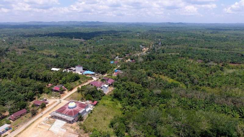 The area is home to major mining activities as well as rainforests and endangered orangutans