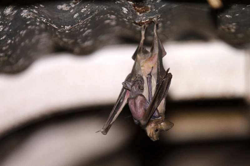 """The area where bats now roost in the abandoned outposts has """"a stable population with a small increase"""", according to"""