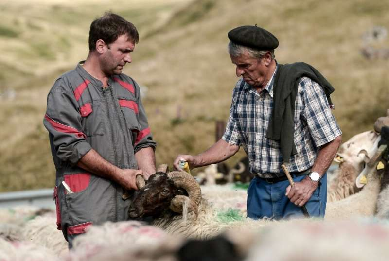 The arrival of two bears in the Pyrenees in October 2018 left farmers feeling agitated