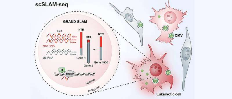 The battle between virus and host cell