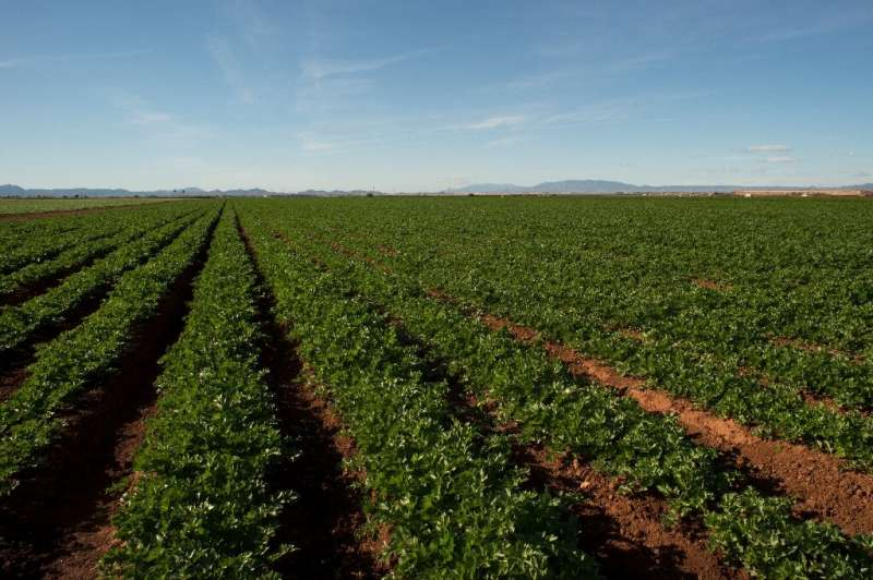 The Campo de Cartagena is a vast area of intensive agriculture which today covers between 50,000 and 60,000 hectares (124,000 to