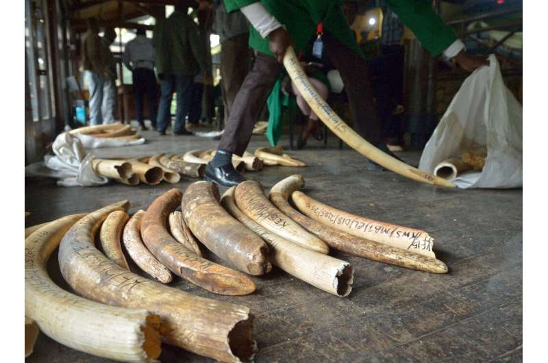 The CITES conference aims to tighten rules on trade in elephant ivory and other endangered animal and plant species