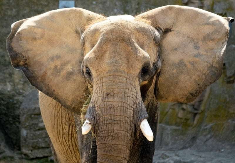 The CITEs decision bans transporting African elephants in the wild to zoos