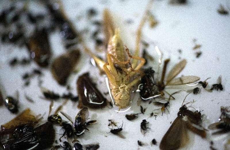 """El contenido de una trampa para insectos enfatiza los temores de Kroon de que Europa occidental pronto pueda llegar a un """"punto sin retorno"""".  en"""