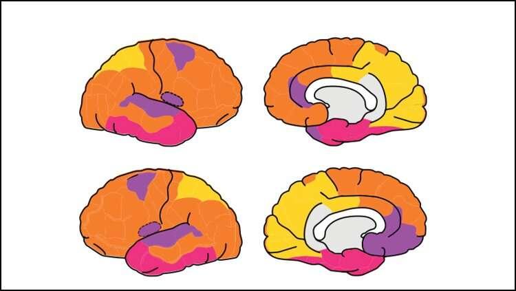 The fetal brain possesses adult-like networks