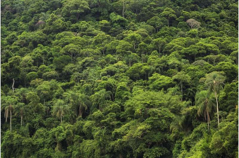 The forests of the Amazon are an important carbon sink