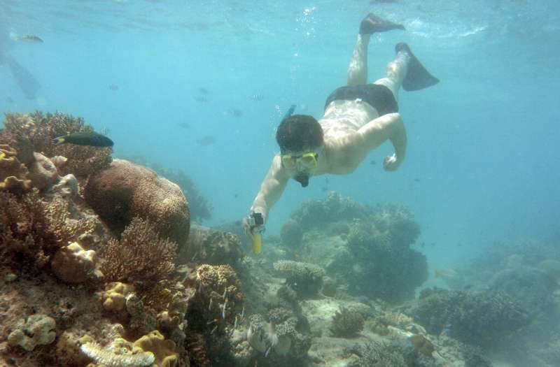 The Great Barrier Reef Marine Park Authority has singled out rising sea temperatures due to climate change as the organism's big
