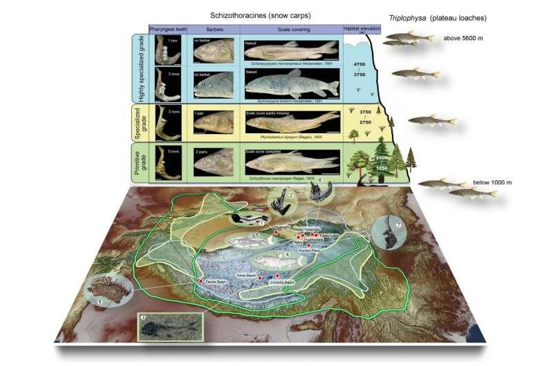 The growing Tibetan Plateau shaped the modern biodiversity
