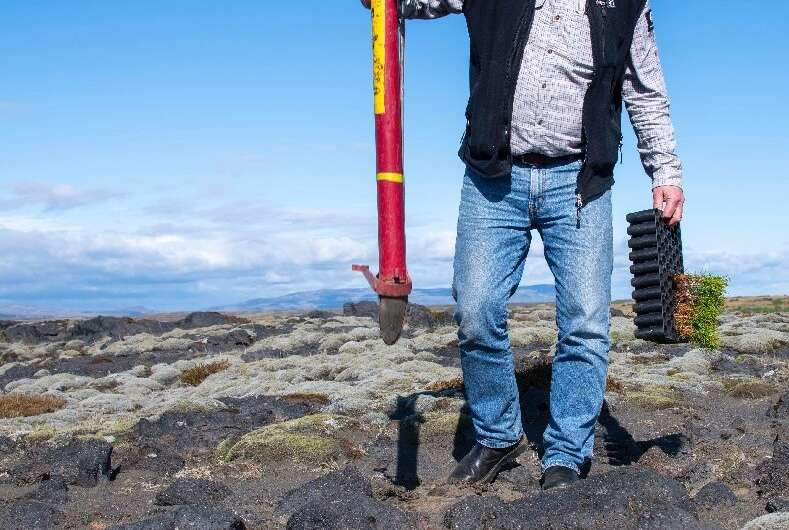 The Icelandic government has made afforestation one of its priorities in its climate action plan
