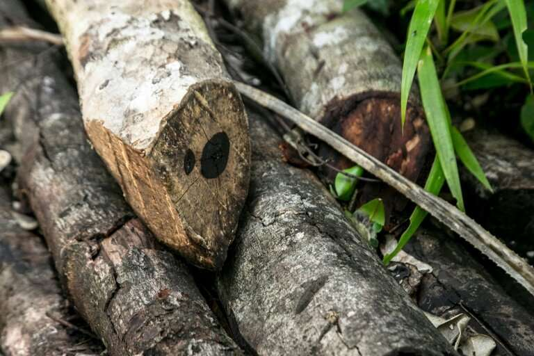 The patrol found freshly-cut ebony trees—a protected hardwood that is being illegally felled and then burned to make charcoal