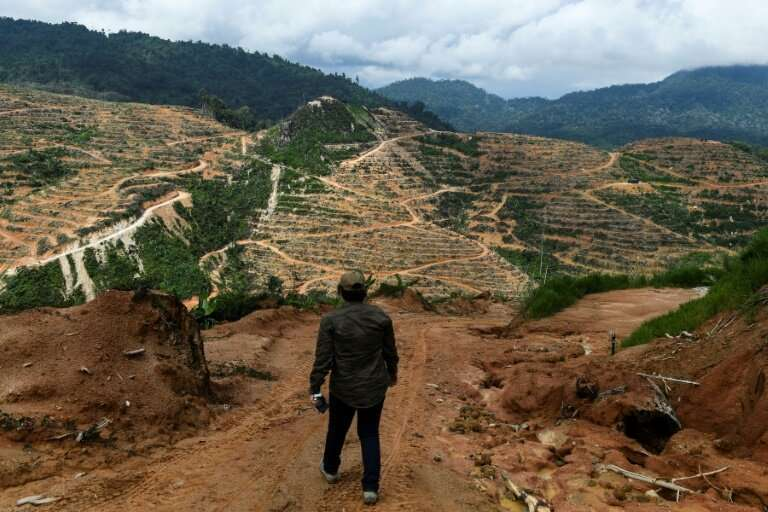 The report finds that three-quarters of land surfaces have been 'severely altered' by mankind including through deforestation