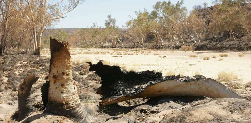 The summer bushfires you didn't hear about, and the invasive species fuelling them