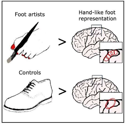 The toes of artists who paint with their feet can be mapped in their brains
