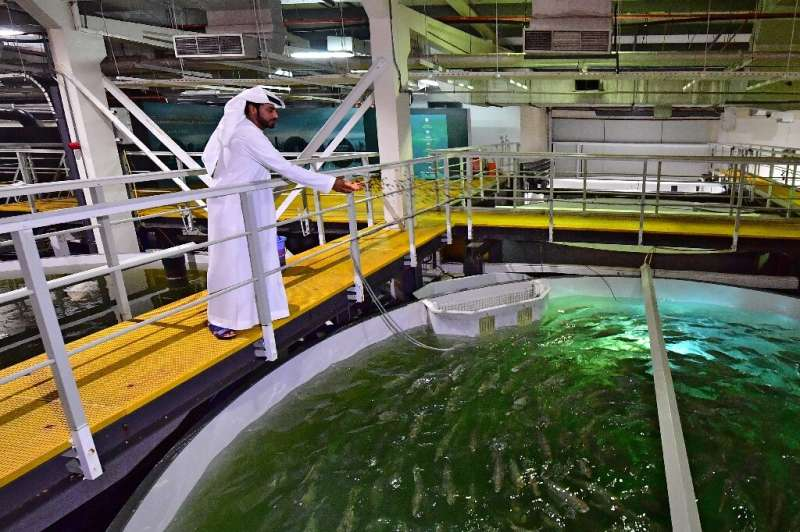 The UAE imports more than 90 percent of its fish from abroad, Mubarak said, adding they would like to meet the demand at home in
