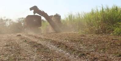 The use of sugarcane straw for bioenergy is an opportunity, but there are pros and cons