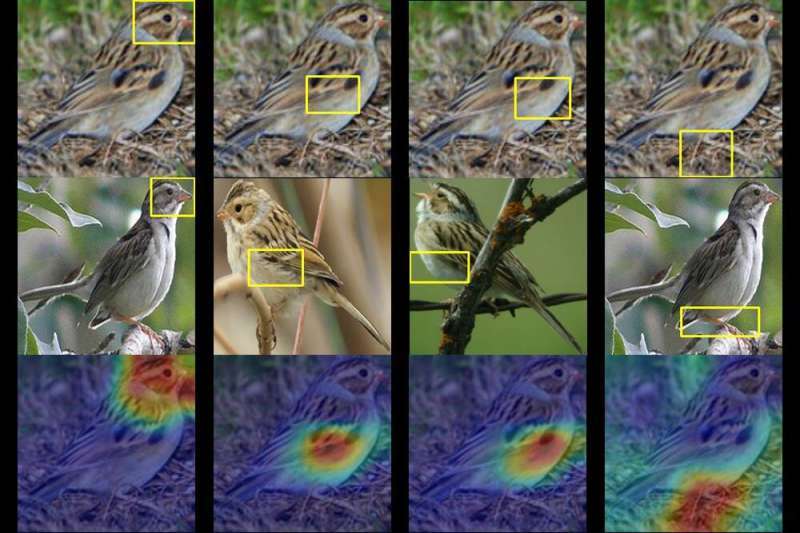 This AI birdwatcher lets you 'see' through the eyes of a machine