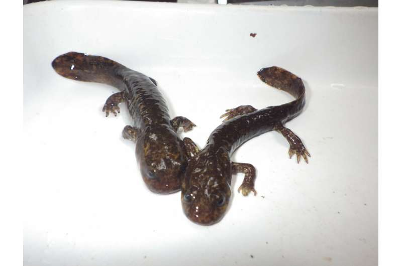 Trout, salamander populations quickly bounce back from severe drought conditions