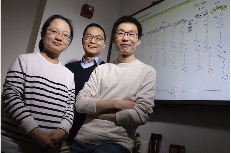 Unmuting large silent genes lets bacteria produce new molecules, potential drug candidates