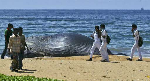Unusual alliance in Sri Lanka forged to save blue whales