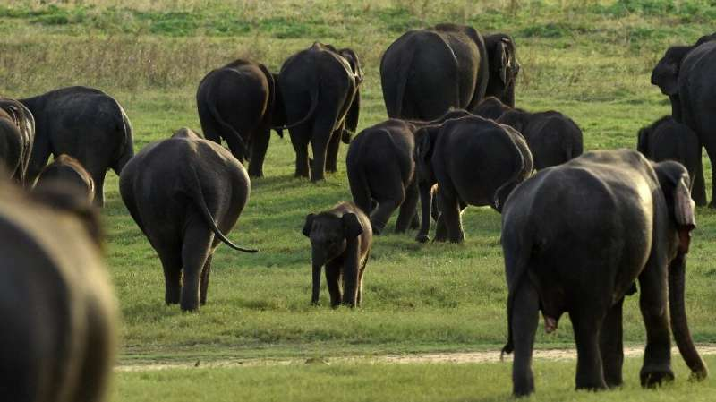 Up to a million species face extinction, many within decades, according to a draft UN report to be vetting in Paris this week