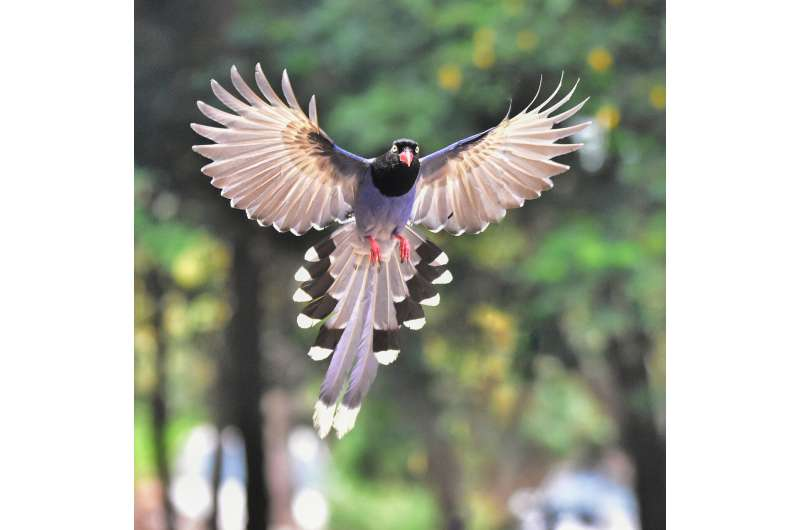 USC researchers show how feathers propel birds through air and history